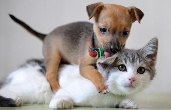 puppy-kitten.jpg
