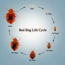 Sleep Tight Don T Let The Bed Bugs Bite Proactive Pest Control