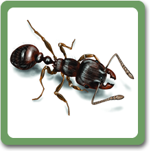 payment-ant